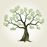 Vector Color Olive Tree with green leafs. Royalty Free Stock Photo