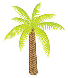 Vector color palm tree for your design. Royalty Free Stock Image
