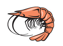 Vector color prawn Royalty Free Stock Image