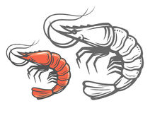 Vector color prawn. Icon on white background Stock Photography