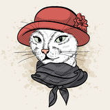 Vector color set of elegant cat woman face. Vector color sketch of elegant cat woman face with hat with flower and scarf Royalty Free Stock Photo
