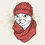 Vector color set of elegant cat woman face. Vector color sketch of elegant cat woman face with knitting cap and snood Stock Photos