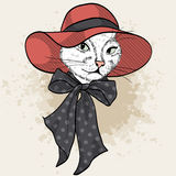 Vector color set of elegant cat woman face. Vector color sketch of elegant cat woman face with wide brimmed hat and bow Stock Photography