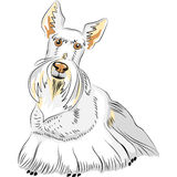 vector Color Sketch Dog Breed Scottish Terrier Royalty Free Stock Photo