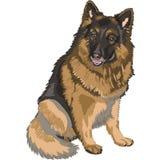 Vector Color sketch dog German shepherd breed. Portrait of a dog German shepherd breed sitting and smile Royalty Free Stock Image