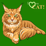 Vector color sketch fluffy Maine Coon cat. Vector color sketch serious red fluffy Maine Coon (American Longhair) cat lying Stock Photos