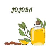 Template jojoba vector illustration