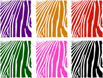 Vector color zebra skin set Royalty Free Stock Image