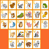 Vector color zoo alphabet with cute animals. Rectangular cards Vector Illustration