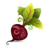 Vector Colored Decorative Beet with Top Stock Image