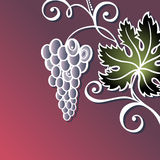Vector Colored Floral Background with Grape Royalty Free Stock Images