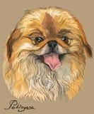 Vector colored portrait of Pekingese dog. Hand drawing Illustration on beige background Stock Photo