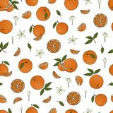 Vector colored seamless pattern of oranges vector illustration