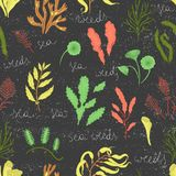 Vector colored seamless pattern of seaweeds isolated on black textured background stock illustration