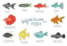 Vector  colored set of  aquarium fish isolated on white background stock illustration