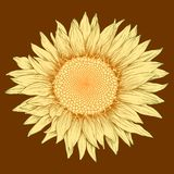 Vector colored sunflower. Vector colored sunflower in vintage engraving style Stock Photos