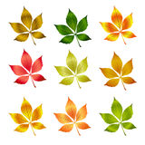 Vector colorful autumn leafs .Autumn background Royalty Free Stock Photo
