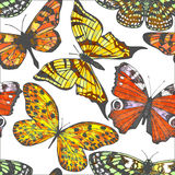 Vector colorful background with butterflies Stock Photo