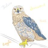 Vector colorful bird Rough-legged Buzzard. Sketch funny cartoon colorful bird Rough-legged Buzzard Stock Photos