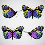 Vector colorful butterflies Royalty Free Stock Photo
