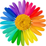 Vector colorful daisy. Royalty Free Stock Photo