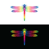 Vector of colorful dragonfly design. insect Animal. Royalty Free Stock Photo