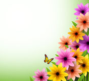Vector of Colorful Flowers Background for Spring Season Royalty Free Stock Photography
