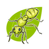 Vector colorful hand drawn illustration of ant. Royalty Free Stock Photography