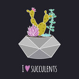 Vector colorful illustration with cactus, succulents in geometric pot and phrase `I love succulents` Royalty Free Stock Photo