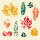 Vector colorful leaves prints set. Vector colorful leaves print set. Silhouettes of autumn leaves. Different kind of trees leaf collection Stock Images