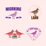 Vector colorful logo set with desert Crested lark bird Stock Photo