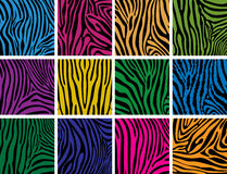 Vector colorful skin textures of zebra Royalty Free Stock Images