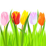 vector Colorful spring tulips in grass Stock Photography