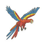 Vector colorful textured sketch drawn by hand of parrot on a white background. Bright exotic tropical flying bird macaw. Isolated Stock Photos