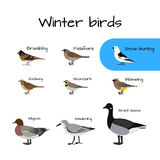 Vector colorful winter bird icons. Royalty Free Stock Image