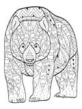 Vector coloring bear for adults Royalty Free Stock Image
