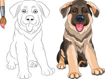 Vector Coloring Book of Puppy Shepherd stock images