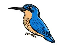Kingfisher, side view. Vector, coloured, sketch, hand drawn image of kingfisher Royalty Free Stock Images