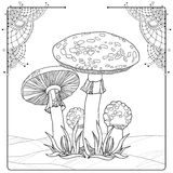 Vector composition with Amanita or Fly agaric mushroom isolated on white. Outline poisonous red-cup mushroom in line art decor. Stock Photos