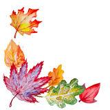 Vector composition with autumn leaves Stock Image