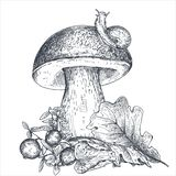 Vector composition of hand drawn forest mushroom with fall leaves, snail, cranberry Stock Photography