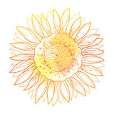 Vector composition with outline yellow Sunflower or Helianthus flower and pastel blots isolated on white background. Floral elements in contour style with Stock Photo
