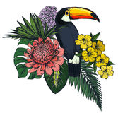 Vector composition of tropical flowers and exotic bird. Royalty Free Stock Photography