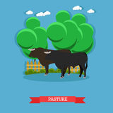 Vector concept poster of beef farm. Grazing cattle on a pasture Royalty Free Stock Images