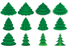 Vector conifers Stock Image