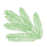 Vector conifers illustration on white. Evergreen plant sketch. Christmas decoration elements Royalty Free Stock Photo