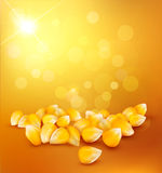 Vector corn on a gold background Stock Photography