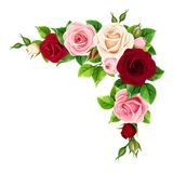 Red, pink and white roses. Vector corner background. stock illustration