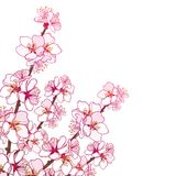Vector corner bouquet with outline blooming Apricot flower bunch in pastel pink isolated on white background. Ornate blossom branch of Apricot flowers in Stock Images