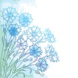 Vector corner bouquet with outline Cornflower or Knapweed or Centaurea flower, bud and leaf in blue on the pastel background. stock illustration